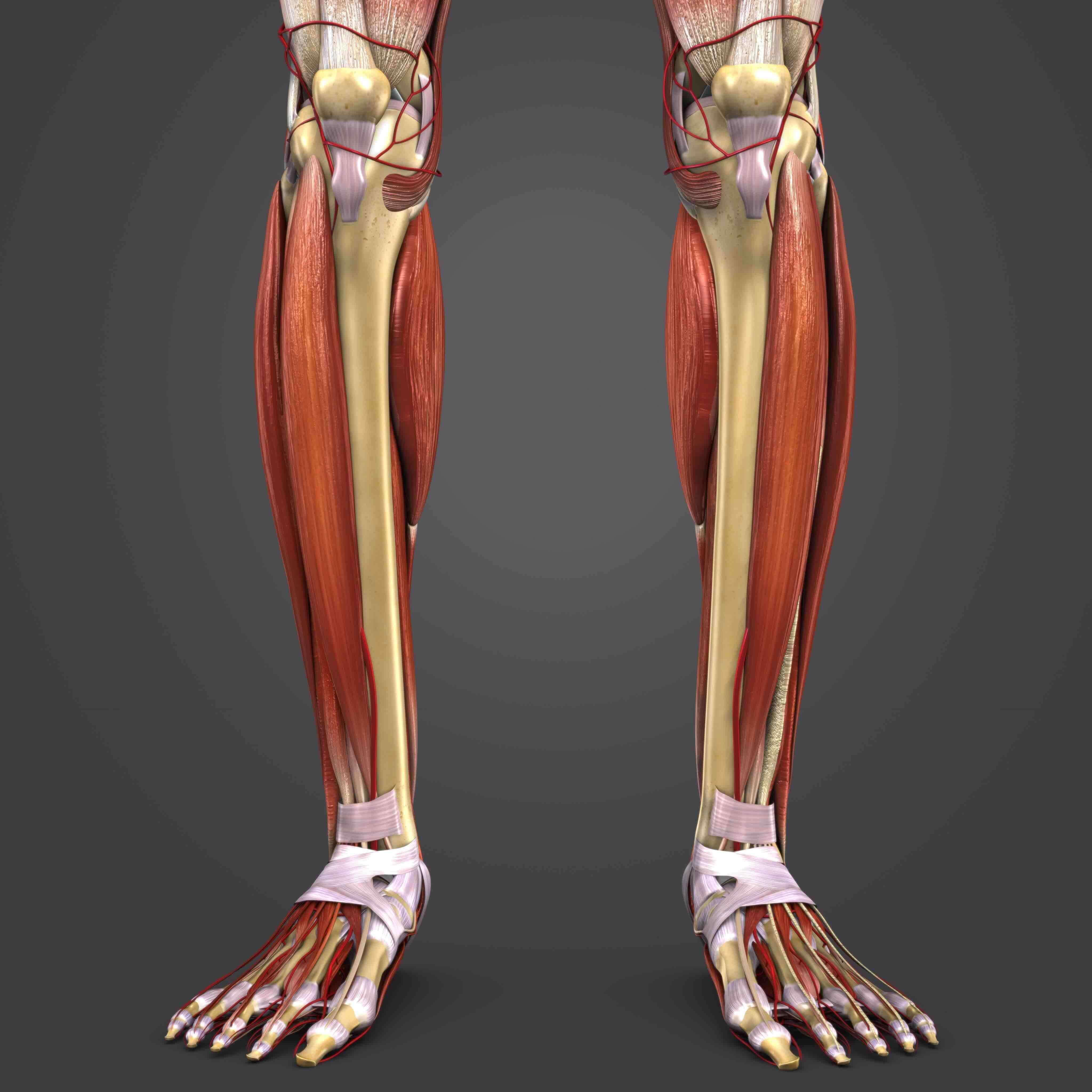 Shin Splints Medial Tibial Stress Syndrome Aoa Orthopedic Specialist