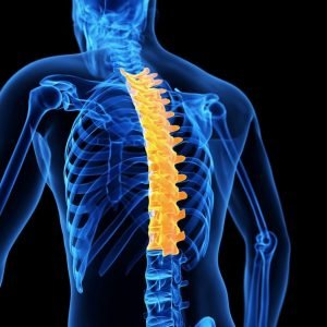 Thoracic Spine Image